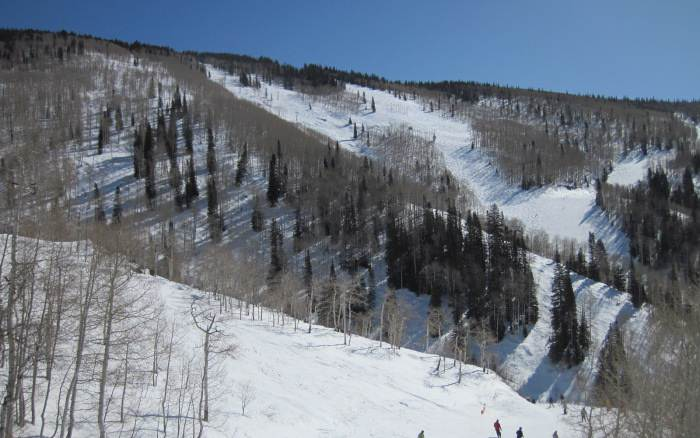 steamboat tree skiing